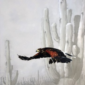 Large oil painting of an Harris's Hawk, wing open, swooping through the cactus by Doyle Hostetler as seen at Sorrel Sky Gallery